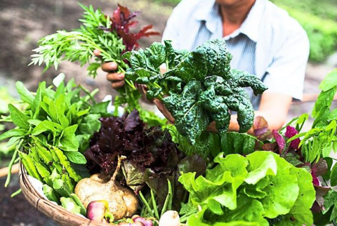 Bihar State Seed and Organic Certification Agency